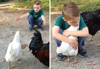 boy hugging chicken