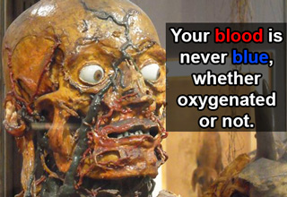 your blood is never blue whether oxygenated or not