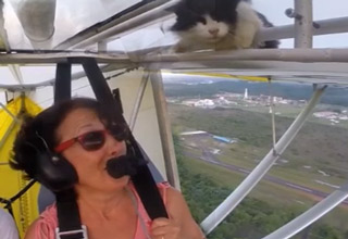 Kitty Surprise During Flight