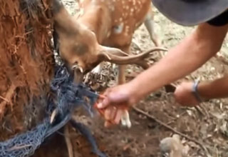 Man Rescues A Deer Stuck In A F