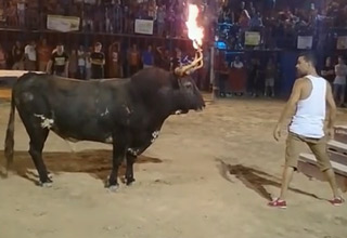 Idiot vs. Bull With Flaming Horns
