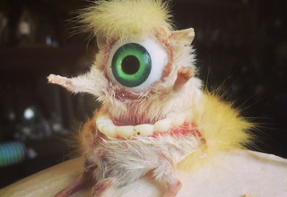 30 Creepy Taxidermied Animals
