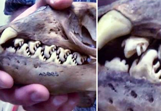 19 Creatures That Are Truly Freaky