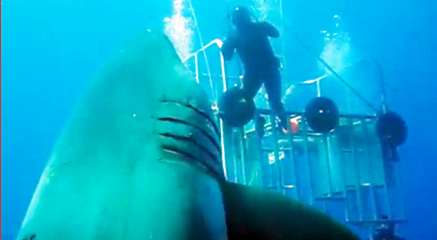 Biggest shark in the world ever recorded
