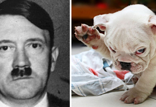 8 Things That Look Uncomfortably Like Hitler