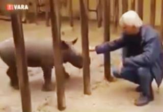 Dangerous Rhino Escapes