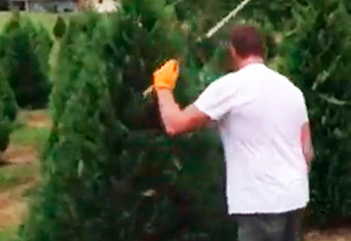 Tree Trimming Ninja Has Mad Skills