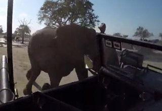 Elephant Attack Captured on GoPro