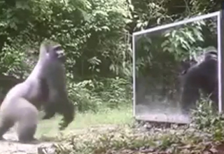 Scientists Put a Mirror in The Jungl