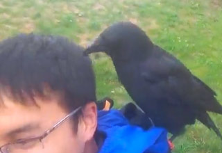 Kid Has An Unusual Encounter With A Crow
