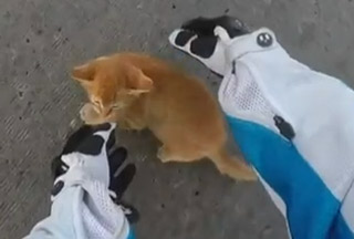 Biker Chick Saves A Kitten In The Intersection