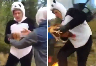 Spinning Chicken Stunt Goes Wrong at Bachelor Party