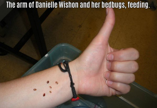 16 People Who Let Bugs Do Weird Things To Them