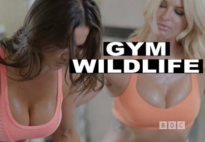 BDC Presents: Gym Wildlife
