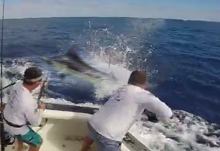 Lucky Fishermen Escapes A Near Death Experience With An Angry Marlin