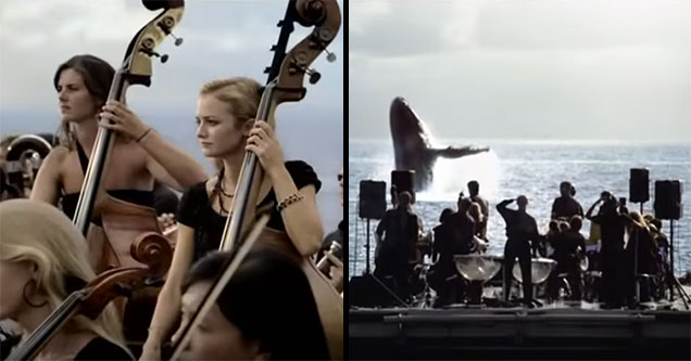 Orchestra Writes a Song For Whales