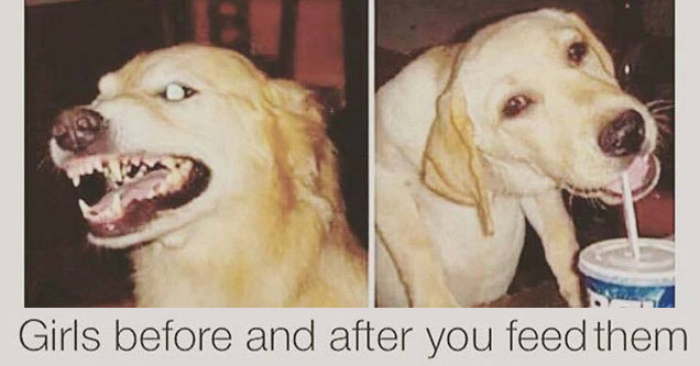 a dog mean and then happy after eating text reads girls before and after you feed them