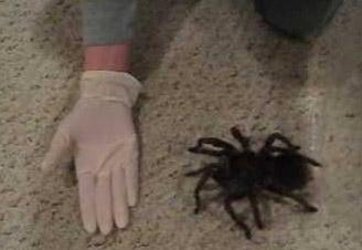 Huge Spider Bite Bursts Video Ebaum S World