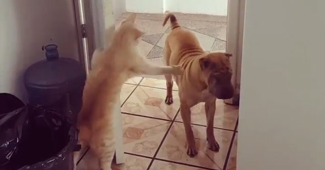 More GIFs Of Animals Being Jerks Animals Nature Gallery - 32 animals complete jerks