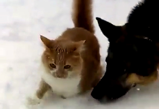 Dog Introduces His Cat Friend To Winter