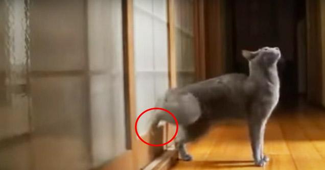 Cat Knocking On Door : Cat knocks on door with machine gun speed video ebaum