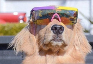 Funny picture of a dog wearing 3-d glasses like some kind future pupper