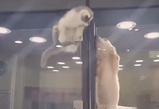 an adorable kitten climbs out of her display and into a puppys