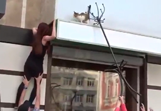 How Not To Rescue A Cat