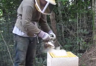 beekeeper smoking a beehive before getting attacked