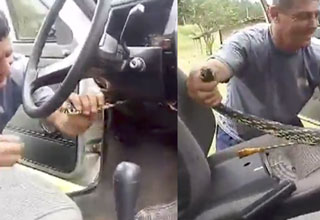 Snake found behind steering column