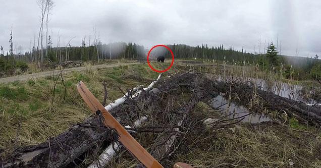 Blackbear has his sights set on bow hunter