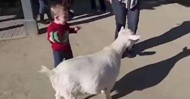 Goat fart scares child