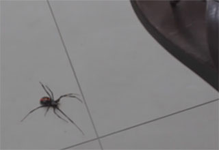 spider gets smacked releases baby spiders all over the place