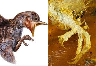 bird found in amber is perfect specimen