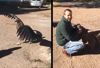 huge condor lands and gives man a hug