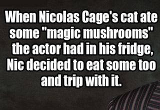 nic cage ate mushrooms after his cat did once