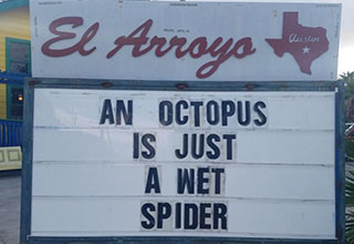an octopus is just a wet spider