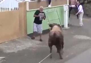 man filming a bullfight on his ipad
