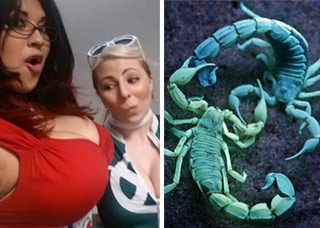 busty girl and blue scorpions