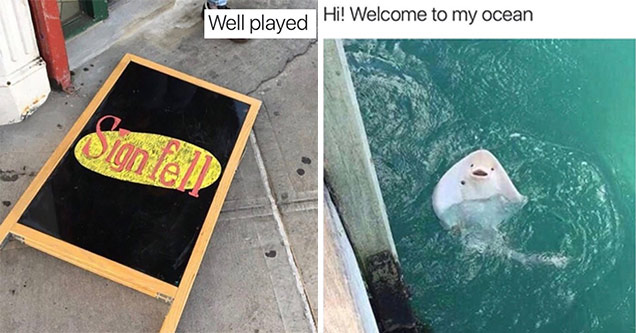 Sign on the ground in Seinfeld font that says Sign Fell and very friendly sting ray inviting you into his ocean