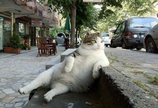 chill cat relaxing on a curb- caption contest