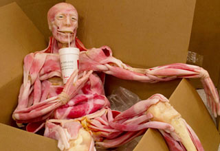 a skinless body sitting in a box