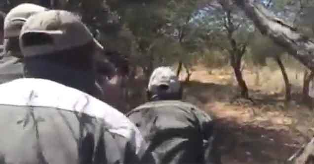 hunters get attacked by a lion