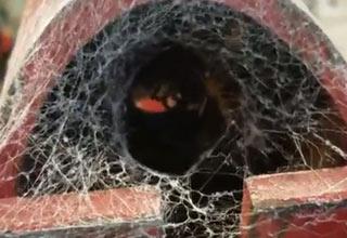 spider hiding in engine jack