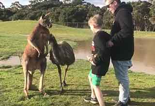 Kid Gets Too Close To A Kangaroo And Takes A Right Hook To The Chin