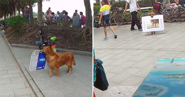 Dog is a walking billboard