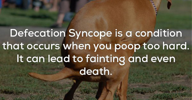 dog poop with facts