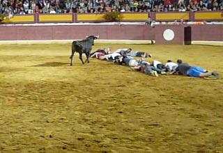 Brave Men Have An Insane Human Centipede Race Against A Bull