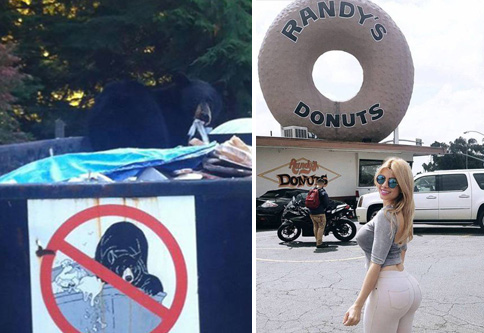 Bear in dumpster and hot girl by Randy's Donuts