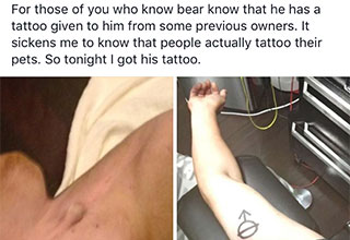 idiots give himself a permanent reminder of his own idiocy